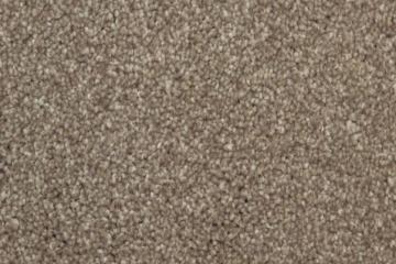 carpet_court-haven_meteor